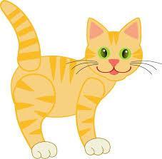 Jeune chat 1