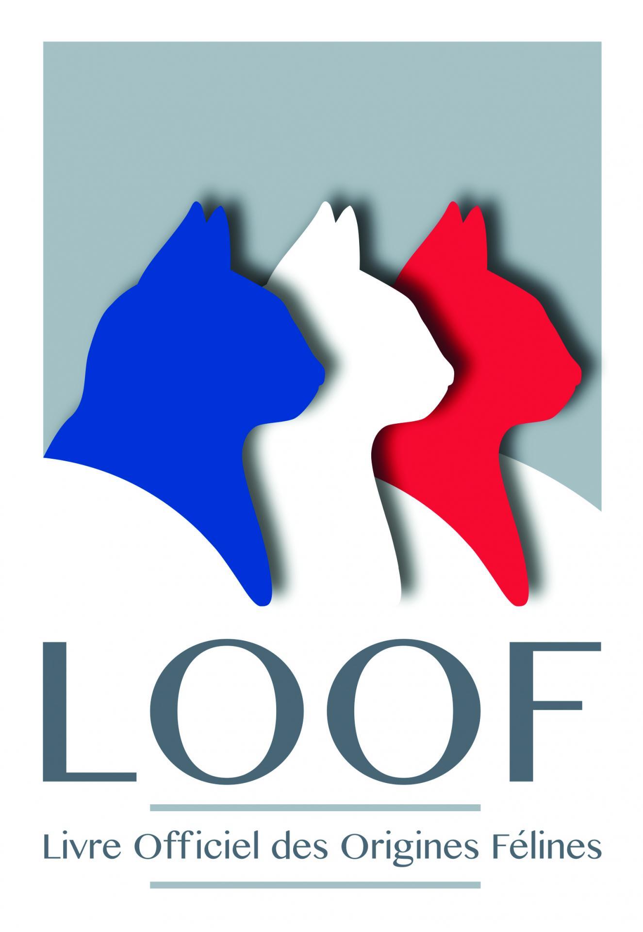Loof logo zone utile 1